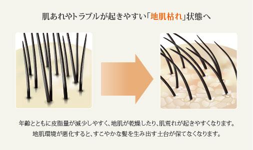 肌あれやトラブルが起きやすい「地肌枯れ」状態へ 年齢とともに皮脂量が減少しやすく地肌が乾燥したり、肌荒れが起きやすくなります。地肌環境が悪化すると、すこやかな髪を生み出す土台が保てなくなります。