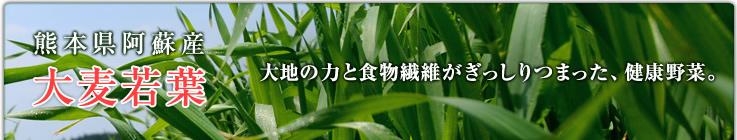 熊本県阿蘇山 大麦若葉 大地の力と食物繊維がぎっしりつまった、健康野菜。