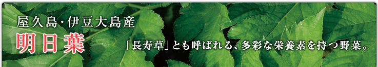 屋久島・伊豆大島産 明日葉 「長寿草」とも呼ばれる、多彩な栄養素を持つ野菜。