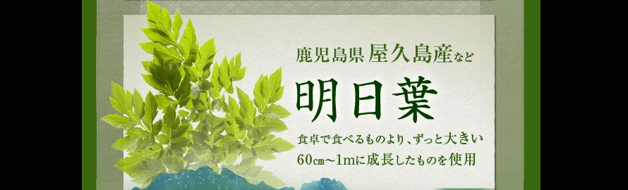 鹿児島県屋久島産など 明日葉 食卓で食べるものより、ずっと大きい 60cm~1mに成長したものを使用
