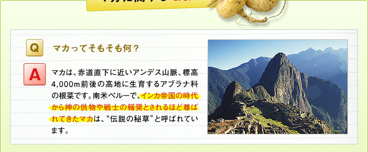 """Q:マカってそもそも何? A:マカは、赤道直下に近いアンデス山脈、標高4,000m前後の高地に生育するアブラナ科の根菜です。南米ペルーで、インカ帝国の時代から神の供物や戦士の報奨とされるほど尊ばれてきたマカは、""""伝説の秘草""""と呼ばれています。"""