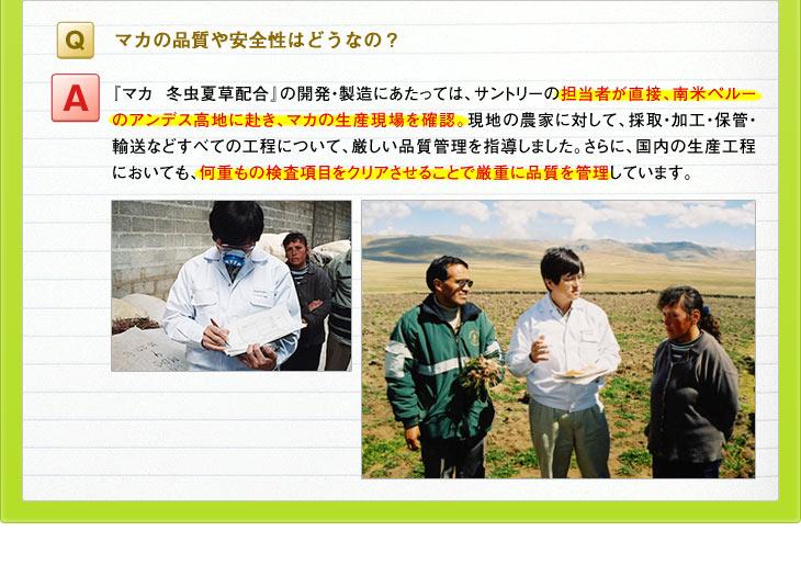 Q:マカの品質や安全性はどうなの? A:『マカ 冬虫夏草配合』の開発・製造にあたっては、サントリーの担当者が直接、南米ペルーのアンデス高地に赴き、マカの生産現場を確認。現地の農家に対して、採取・加工・保管・輸送などすべての工程について、厳しい品質管理を指導しました。さらに、国内の生産工程においても、何重もの検査項目をクリアさせることで厳重に品質を管理しています。