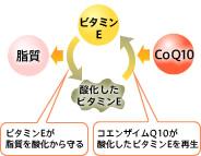 ビタミンEが脂質を酸化から守る・コエンザイムQ10が酸化したビタミンEを再生