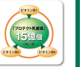 「プロテクト乳酸菌」15億個(3粒目安)ビタミンB2 ビタミンB6 ビタミンB1