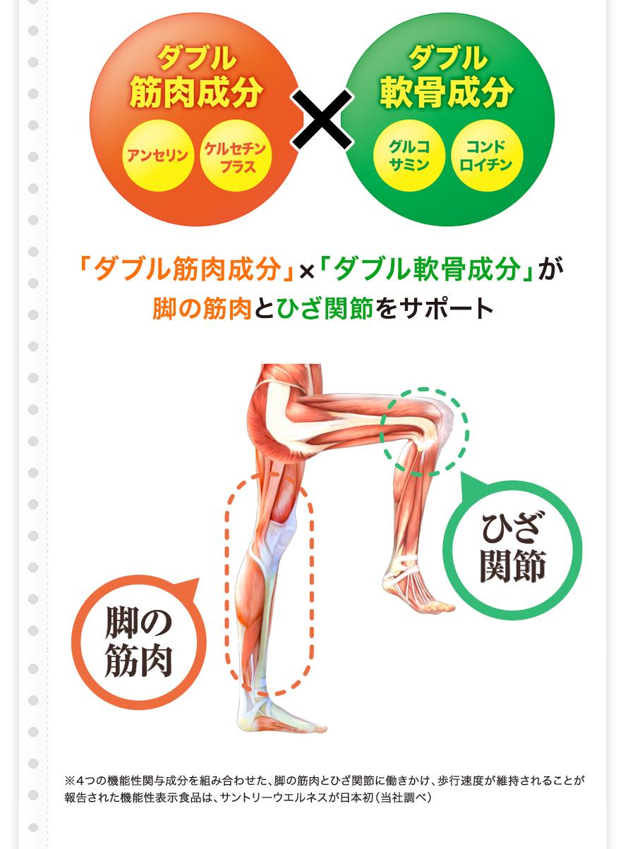 ダブル筋肉成分 アンセリン ケルセチンプラス × ダブル軟骨成分 グルコサミン コンドロイチン 「ダブル筋肉成分」×「ダブル軟骨成分」が脚の筋肉とひざ関節をサポート